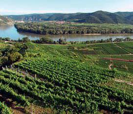 Weinanbaugebiet Wachau Österreich - Vino Culinario