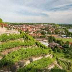 Weinbau an den Hessigheimer Felsengärten - Vino Culinario
