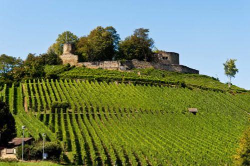 Weinberg vor den Ruinen der Burg Weibertreu - Vino Culinario