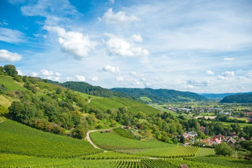 Weinberglandschaft im Kinzigtal bei Gengenbach - Vino Culinario
